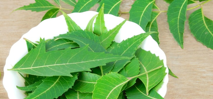 18-amazing-benefits-of-neem-leaves-for-skin-hair-and-health
